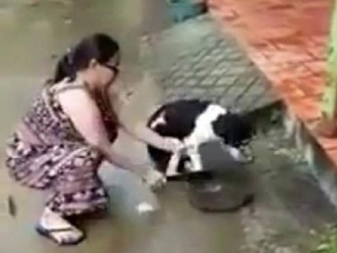 Hình ảnh đáng sợ nhất trong ngày: Người phụ nữ dùng dao chặt chân chú chó dã man