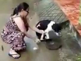 Bị lên án vì hành động chặt chân chó, người chủ lên tiếng: 'Tôi chặt chân để bảo vệ nó'