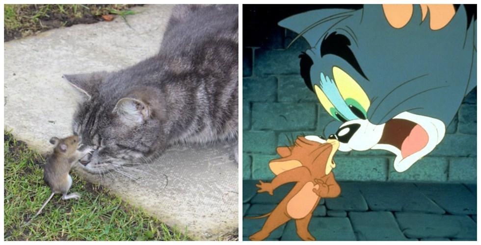 Tom và Jerry phiên bản đời thật vẫn hài như phim-1