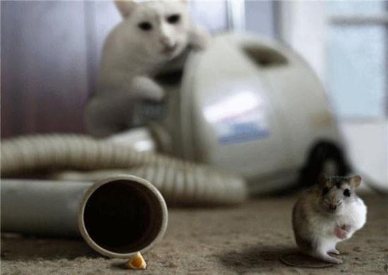 Tom và Jerry phiên bản đời thật vẫn hài như phim-4