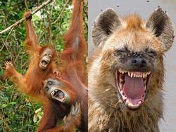 Những khoảnh khắc cười rơi mồm của bè lũ động vật