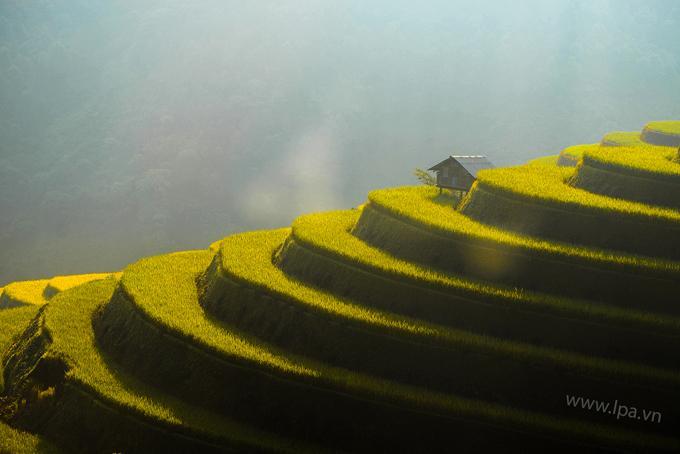 Sắc vàng lúa chín trên rẻo cao ở Mù Cang Chải-7