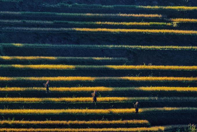 Sắc vàng lúa chín trên rẻo cao ở Mù Cang Chải-8