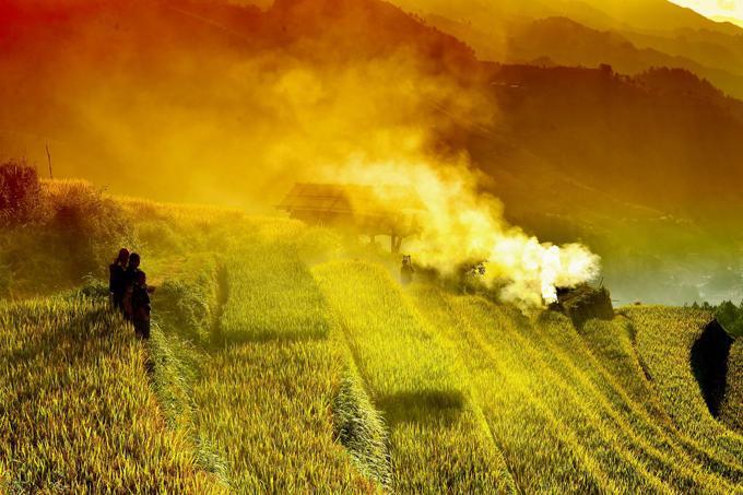 Sắc vàng lúa chín trên rẻo cao ở Mù Cang Chải-9