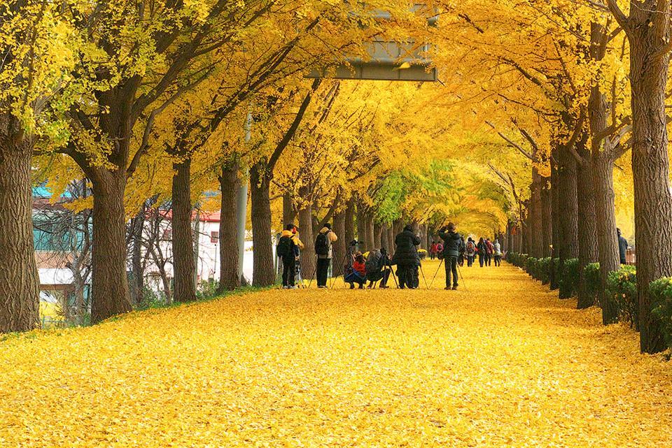 Những đường cây mùa thu đẹp nhất thế giới-1