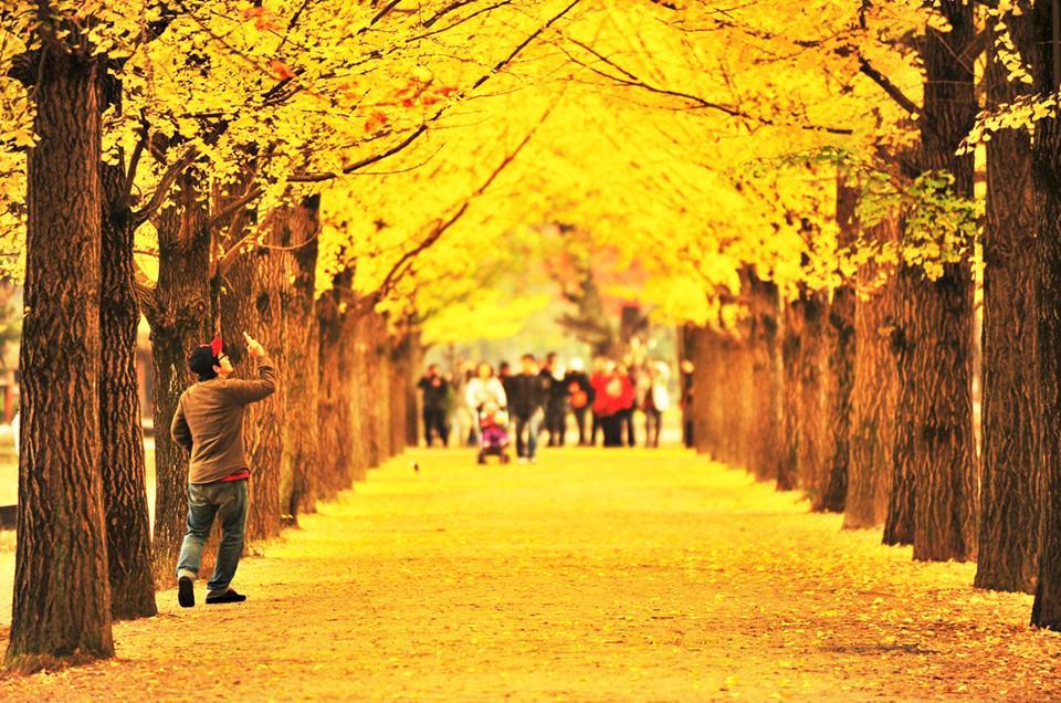Những đường cây mùa thu đẹp nhất thế giới-2