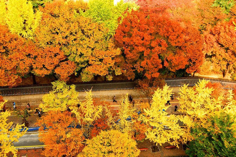 Những đường cây mùa thu đẹp nhất thế giới-3