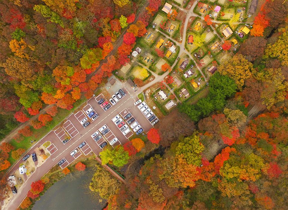 Những đường cây mùa thu đẹp nhất thế giới-4