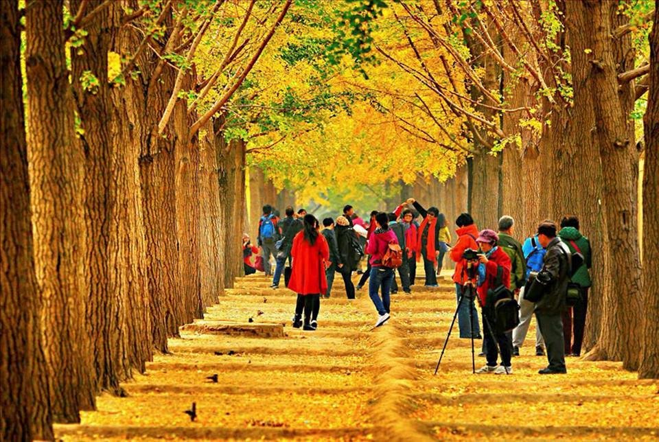 Những đường cây mùa thu đẹp nhất thế giới-5