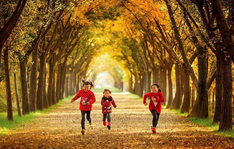 Những đường cây mùa thu đẹp nhất thế giới-6