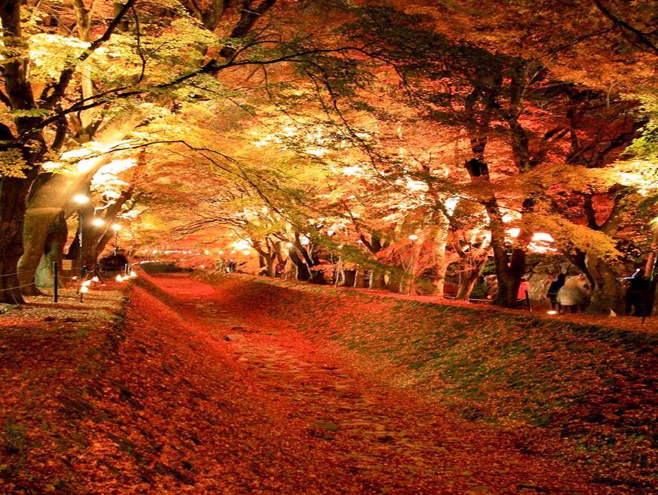 Những đường cây mùa thu đẹp nhất thế giới-8