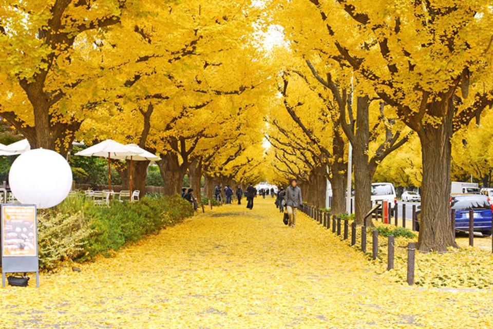 Những đường cây mùa thu đẹp nhất thế giới-9