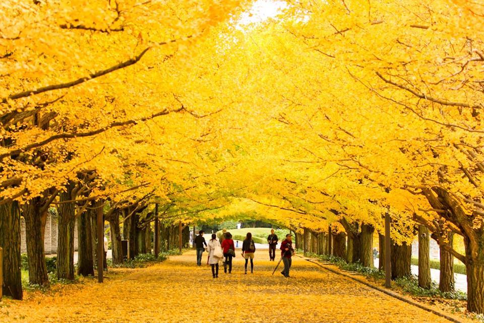 Những đường cây mùa thu đẹp nhất thế giới-10