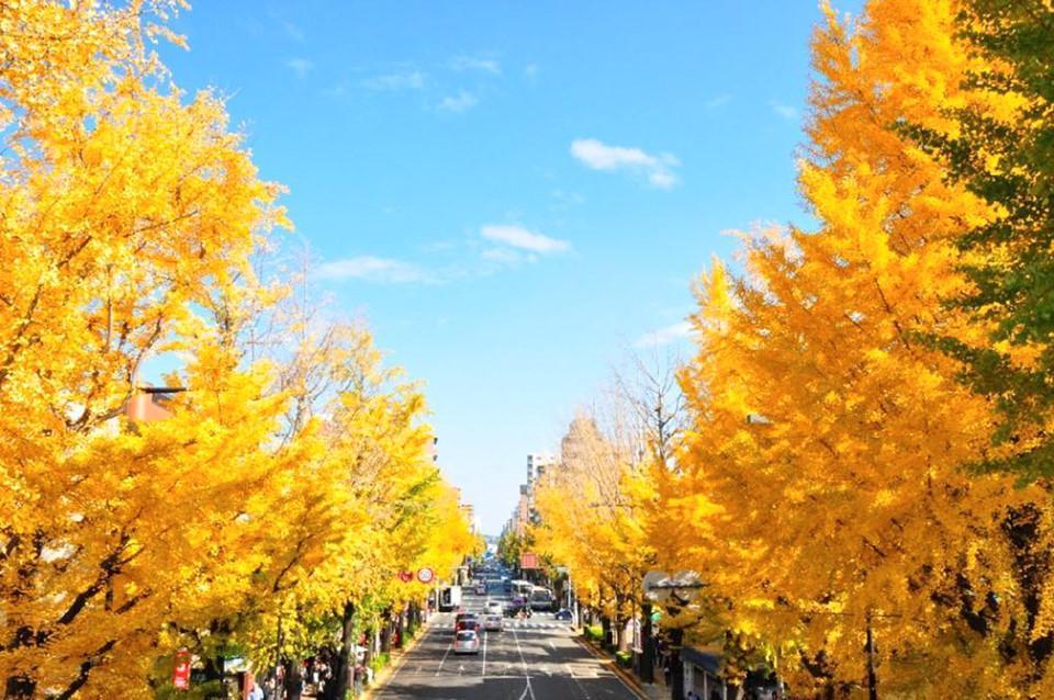 Những đường cây mùa thu đẹp nhất thế giới-11