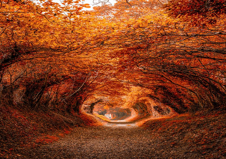 Những đường cây mùa thu đẹp nhất thế giới-12