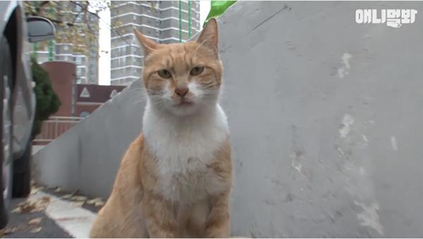Bày sẵn không cần, nhưng cho đồ ăn vào túi lại tha đi và lý do xúc động của cô mèo hoang-1