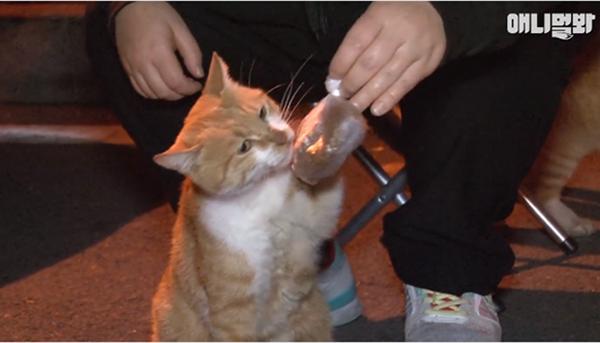 Bày sẵn không cần, nhưng cho đồ ăn vào túi lại tha đi và lý do xúc động của cô mèo hoang-3