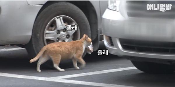 Bày sẵn không cần, nhưng cho đồ ăn vào túi lại tha đi và lý do xúc động của cô mèo hoang-4