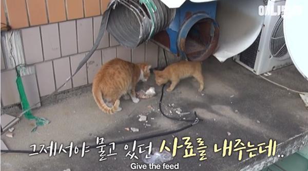 Bày sẵn không cần, nhưng cho đồ ăn vào túi lại tha đi và lý do xúc động của cô mèo hoang-5