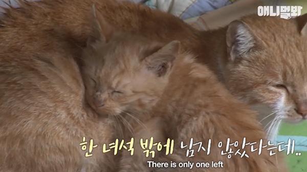 Bày sẵn không cần, nhưng cho đồ ăn vào túi lại tha đi và lý do xúc động của cô mèo hoang-7