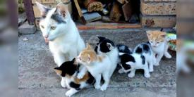 Stray Cat Mama Keeps Her Babies Safe and Fed Even When She Has Nothing to Eat...