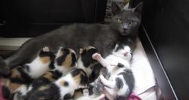 THEY RESCUED THIS MAMA CAT AND HER 8 KITTENS, BUT THEN THEY GOT A SURPRISE THEY WILL NEVER FORGET