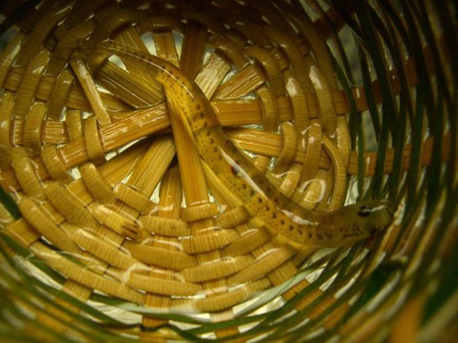 4 món đặc sản châu Á phải ăn sống, nuốt tươi, Việt Nam cũng góp mặt 1 món-9
