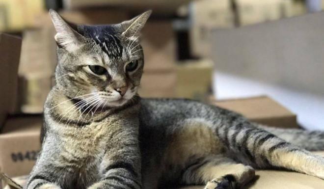 Gần 70.000 người xin cứu con mèo chủ tiệm thuốc ở Hong Kong-1
