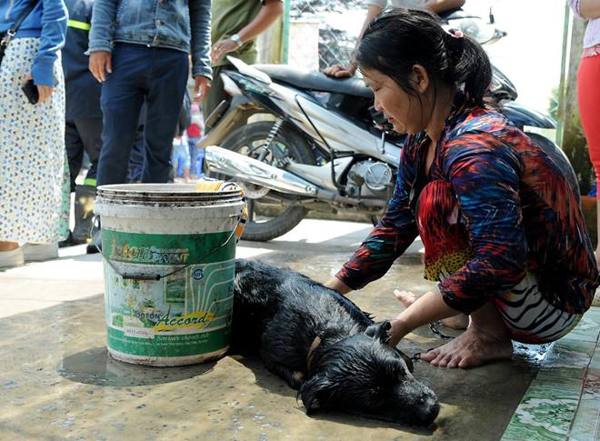 Ám ảnh cảnh người ói ra máu, vật nuôi chết sạch khi rò rỉ khí amoniac-1