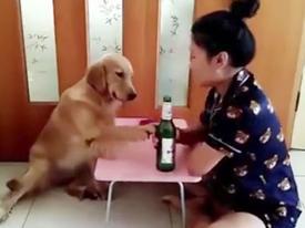 Người yêu có thể không có nhưng chó phải có 1 con