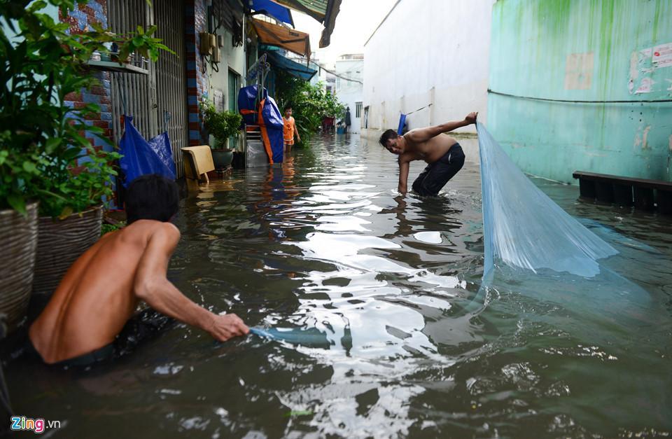 Người Sài Gòn ra đường bắt cá sau trận mưa lớn suốt đêm-12
