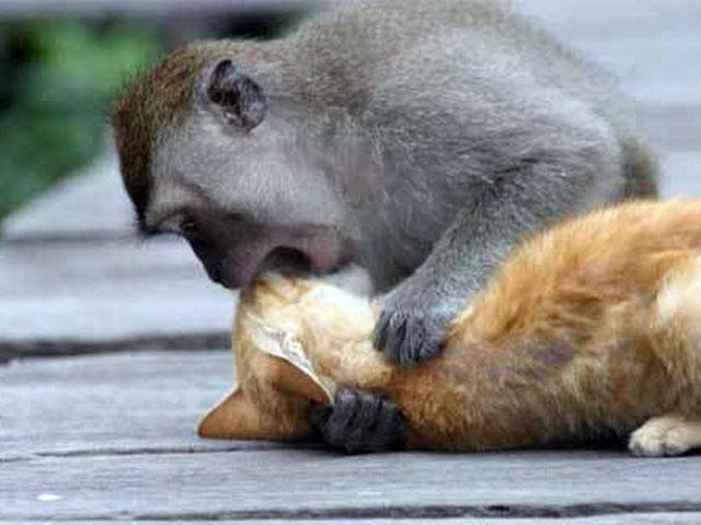 Đừng bao giờ hôn khi chưa được cho phép