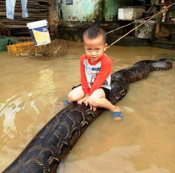 Thông tin bất ngờ về cậu bé 3 tuổi ở Việt Nam gây sốt báo quốc tế vì... cưỡi trăn như đi thuyền-1