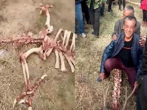 Video phát hiện 'bộ xương rồng khổng lồ' tại Trung Quốc gây bão mạng
