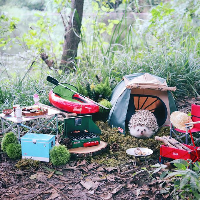 Chuyến picnic của chú nhím Nhật tí hon-1