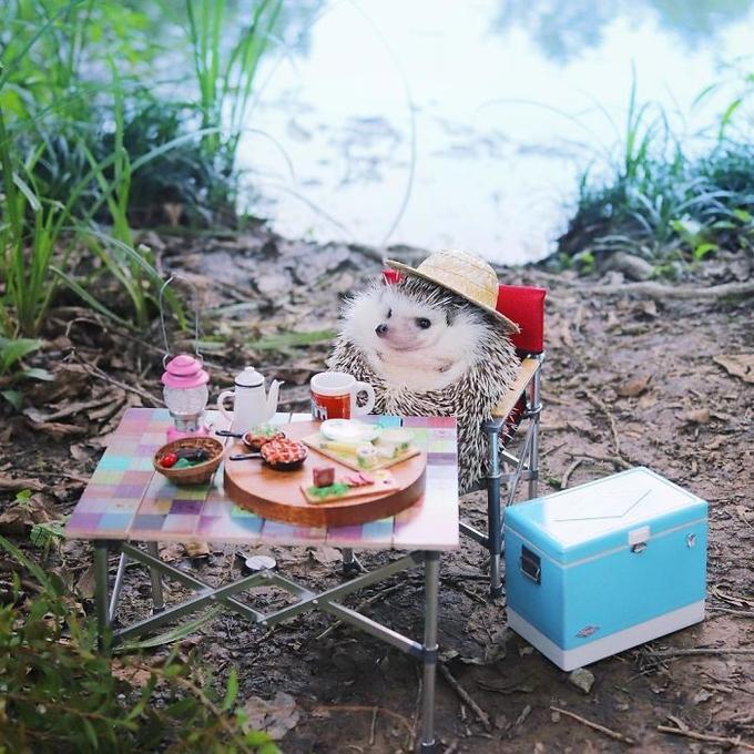 Chuyến picnic của chú nhím Nhật tí hon-5