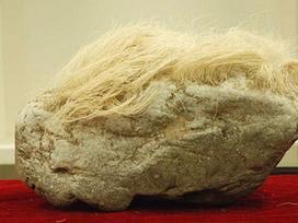 Mang 'cục đá mọc tóc trắng' kỳ dị về nhà, người đàn ông giật mình khi phát hiện ra sự thật