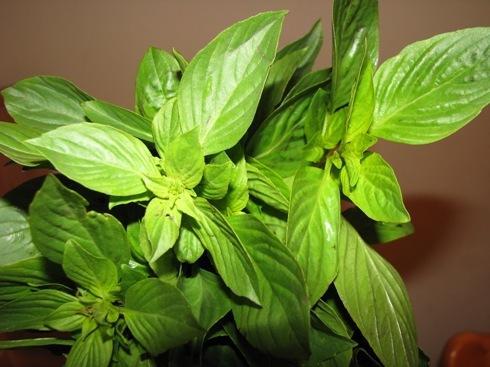 8 loại rau xanh tăng cường vẻ đẹp-4