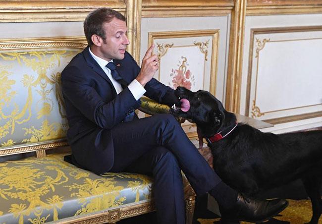 Chó cưng của Tổng thống Pháp đứng tè giữa cuộc họp cấp cao-2