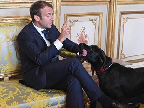 Chó cưng của Tổng thống Pháp đứng tè giữa cuộc họp cấp cao