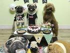 Em cún tên Tom 2 tuổi và tiệc mừng sinh nhật cực hoành tráng, còn mời cả bạn bè tới chơi