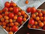 Làm đẹp da bằng cách dùng cà chua đông đá