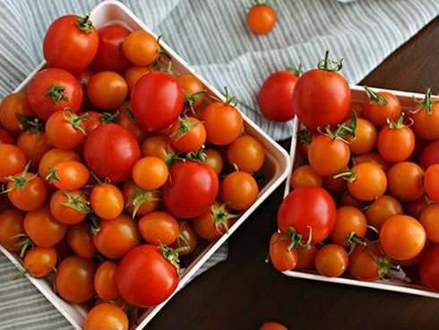 Làm đẹp da bằng cách dùng cà chua đông đá-1