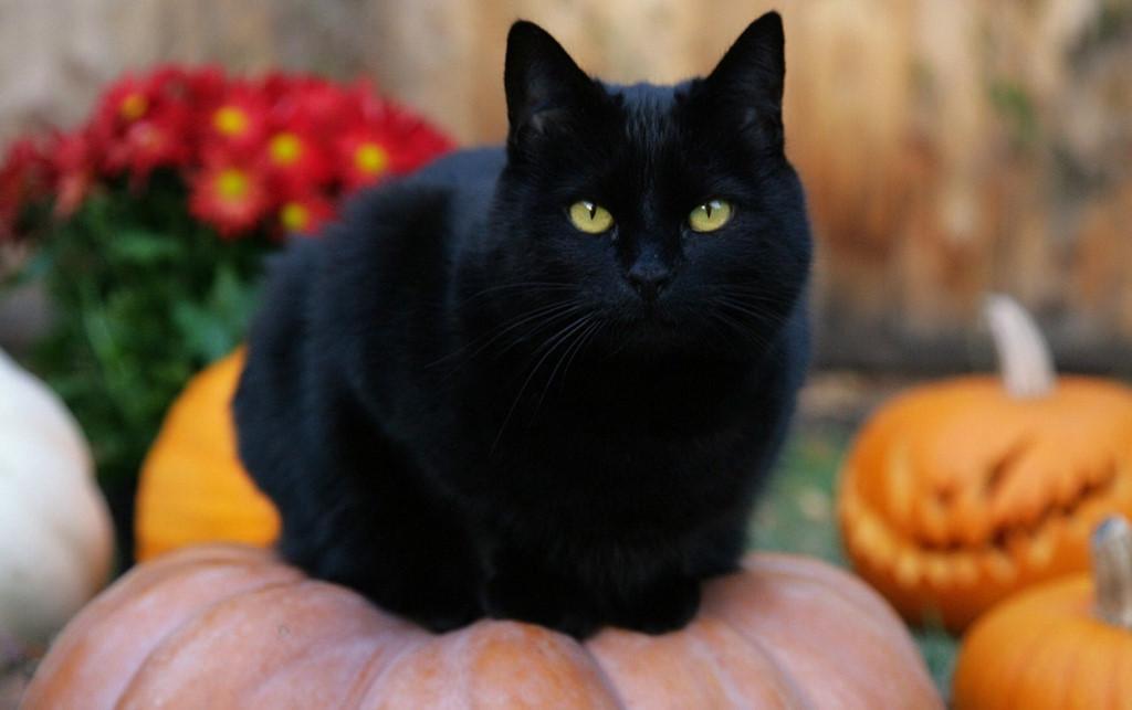 Ý nghĩa của các biểu tượng Halloween-1