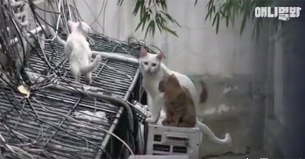 Đi khắp nơi xin đồ ăn cho cả xóm, cô mèo Hàn Quốc được mệnh danh tốt bụng nhất thế giới-4