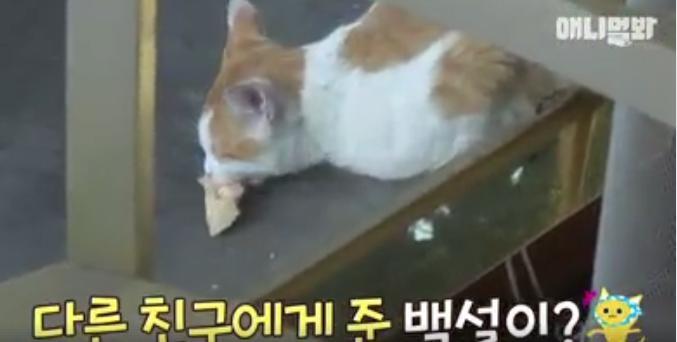 Đi khắp nơi xin đồ ăn cho cả xóm, cô mèo Hàn Quốc được mệnh danh tốt bụng nhất thế giới-3