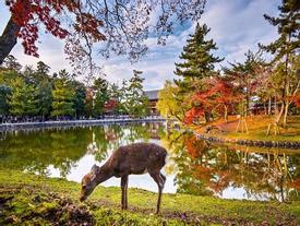 Khung cảnh mùa thu tựa như tranh vẽ trên khắp thế giới