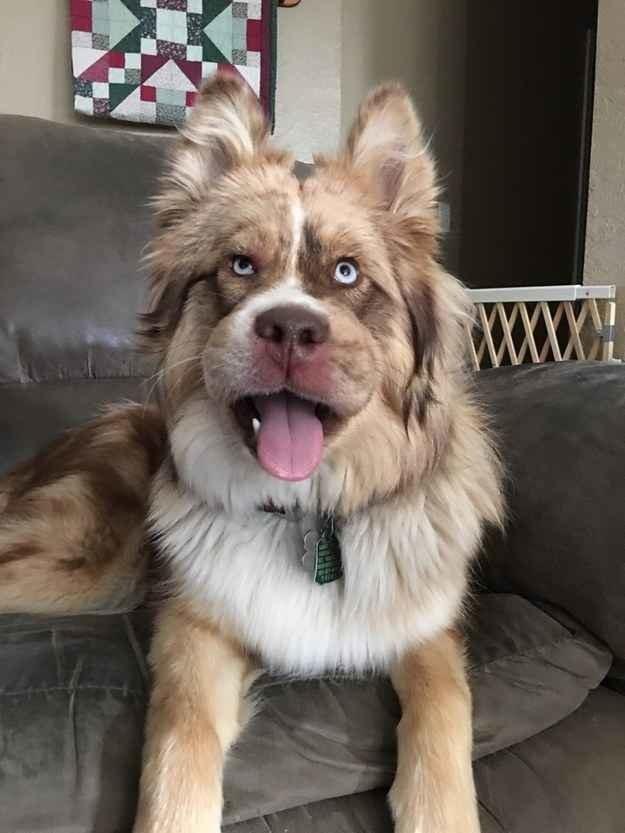 Chết cười những chú chó gặp họa vì tin lời ong bướm-5