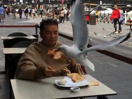 Tin sao Việt 2/11: Đàm Vĩnh Hưng 'đanh đá' đáp trả khi bị đàn chim lao đến cướp thức ăn