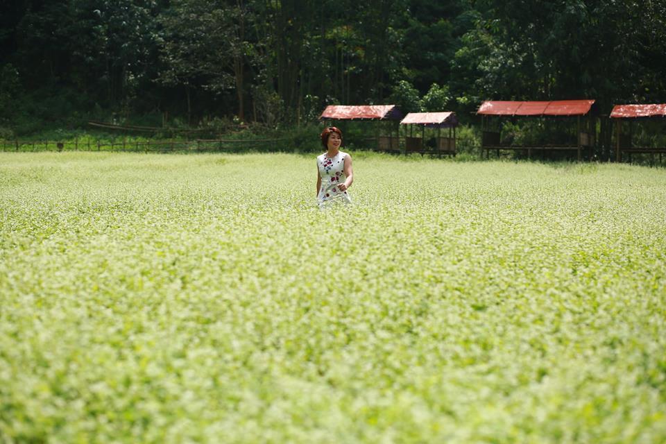 Lịm tim giữa thung lũng hoa Bắc Sơn bồng bềnh ở xứ Lạng-1
